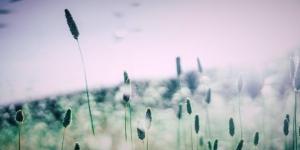 Polleninformationen